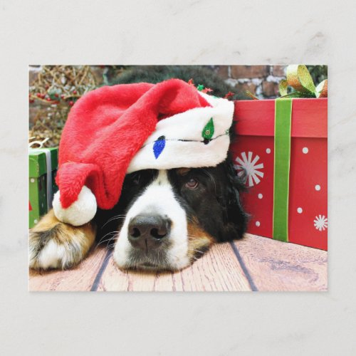 Christmas - Bernese Mountain Dog - Mya Holiday Postcard
