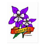 Colorado Columbine Postcard