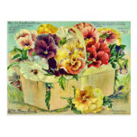 Colorful Pansy Flowers Vintage Seed Packet Cover Postcard