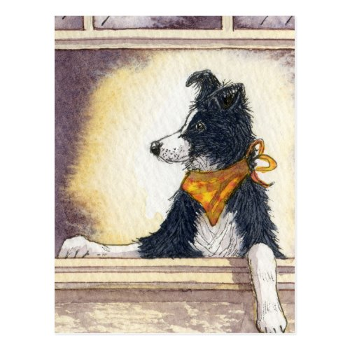 Cool cowboy collie carefully keeps an eye... postcard
