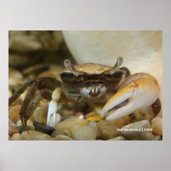 Crab Louis Print