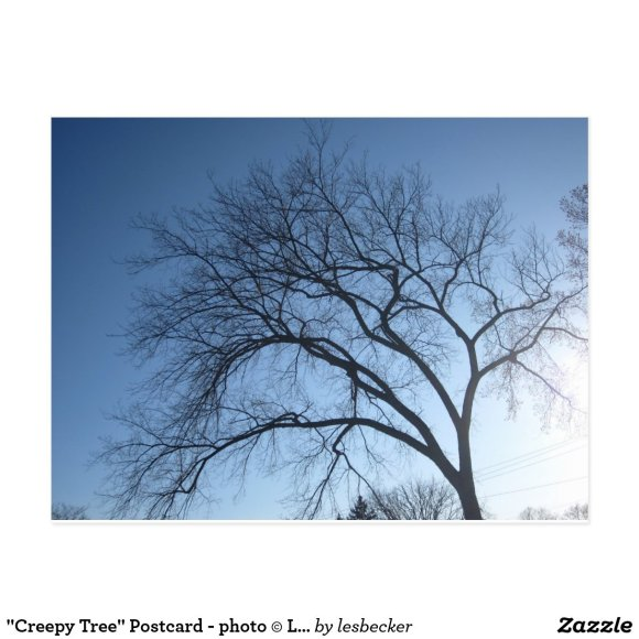 """Creepy Tree"" Postcard - photo © Les Becker, 2012"