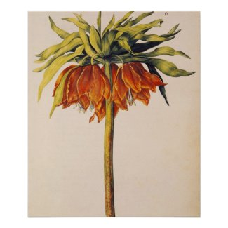 Crown Fritillary, from 'La Guirlande de Julie' print