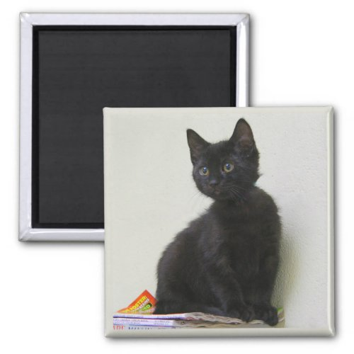 Cute Black Kitten Magnet magnet
