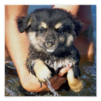 Cute Fluffy Puppy Dog Photograph Posters