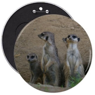 Cute Meerkat Family saying Hello Buttons