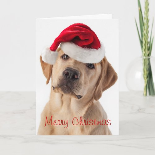 Cute Yellow Lab dog with Santa Hat Christmas card