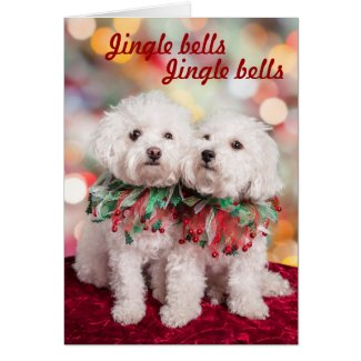Cutest Bichon Frise dogs Christmas card