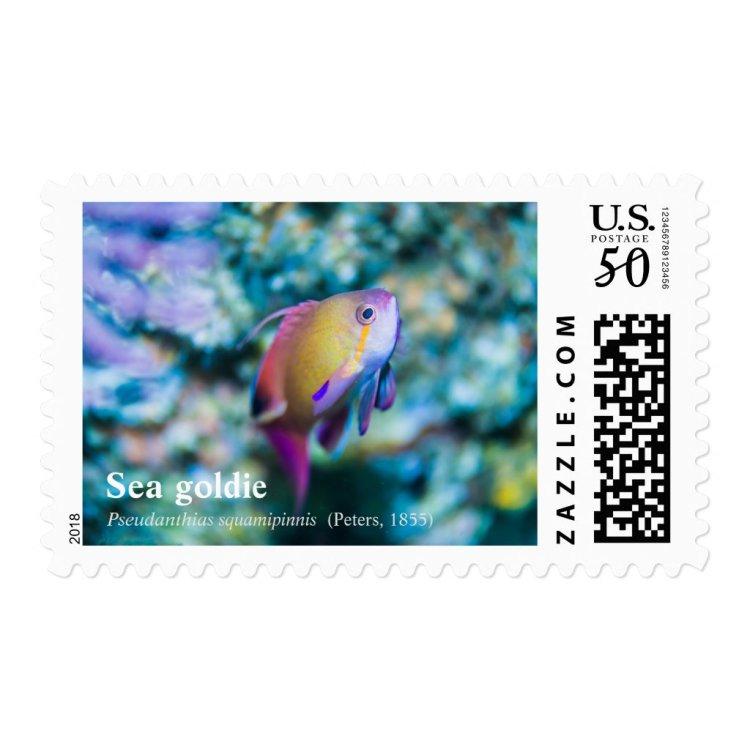 Cutey Sea goldie Postage