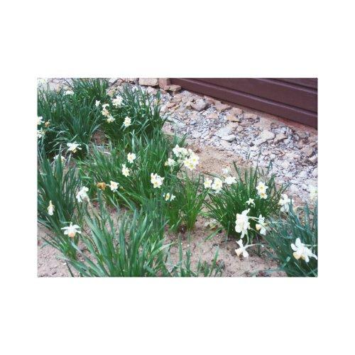 Daffodils In April wrappedcanvas