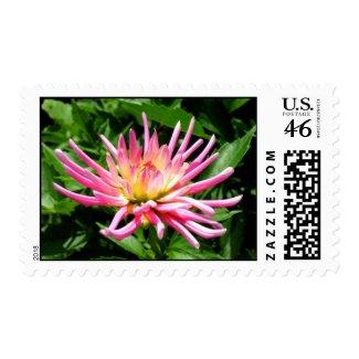 Dahlia flower postage