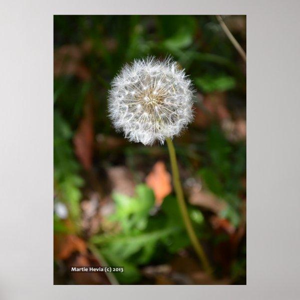 Dandelion Print