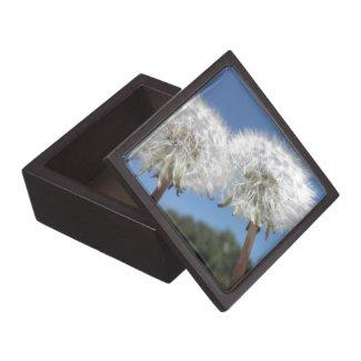 Dandelions Dandelion Puffs Wildflowers Flowers Premium Jewelry Box