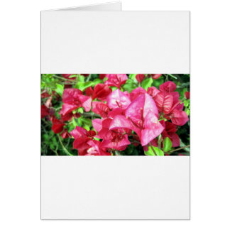 Dark Rhododendron in California Cards