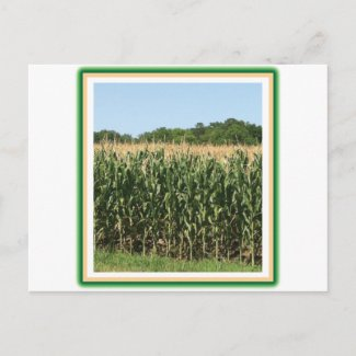 Delaware Corn Post Card