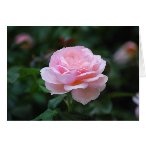 Delicate Pink Rose card