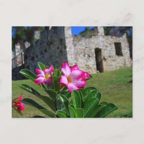 Desert Rose at Sugar Mill, St. John, U.S.V.I. postcard