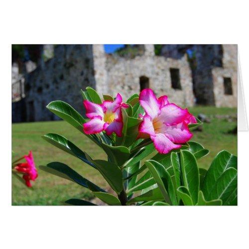 Desert Rose Flowers, St. John V.I. Sugar Mill Card card