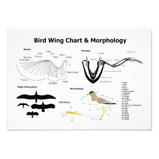 Different Bird Wings
