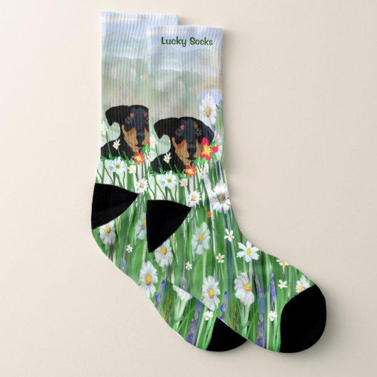 Doberman Pincher Puppy in Daisies Socks