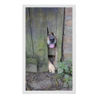 Dog with Nose through Hole in Fence Posters