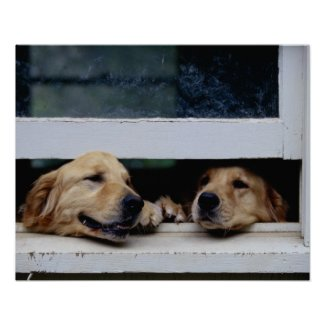 Dogs Looking Out a Window Posters