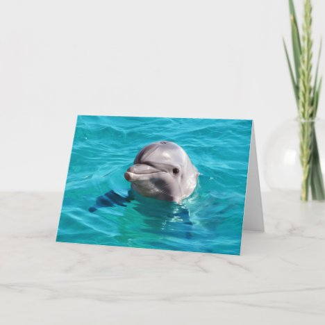Dolphin in Blue Water Photo Card
