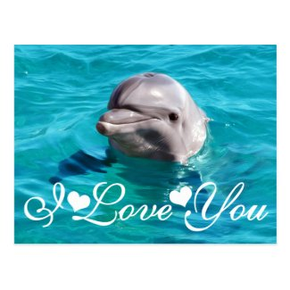 Dolphin in Blue Water Photo Image I Love You Postcards
