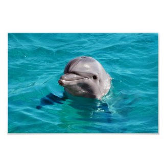 Dolphin in Blue Water Photo Poster