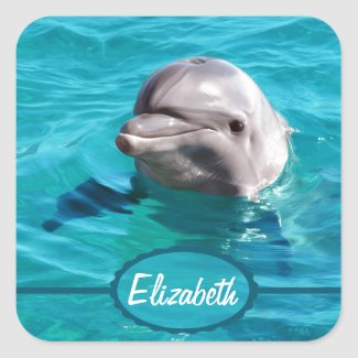 Dolphin in Blue Water Photo Square Sticker