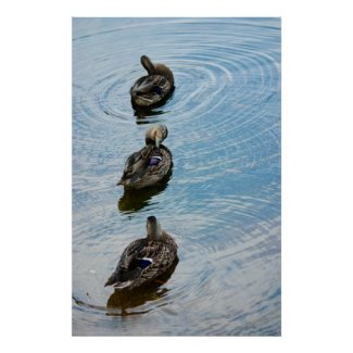 Ducks in a Row print