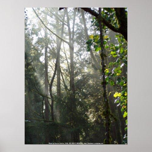 Early Morning Sun Rays #15 print