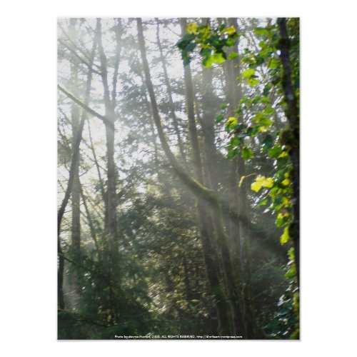 Early Morning Sun Rays #16 print