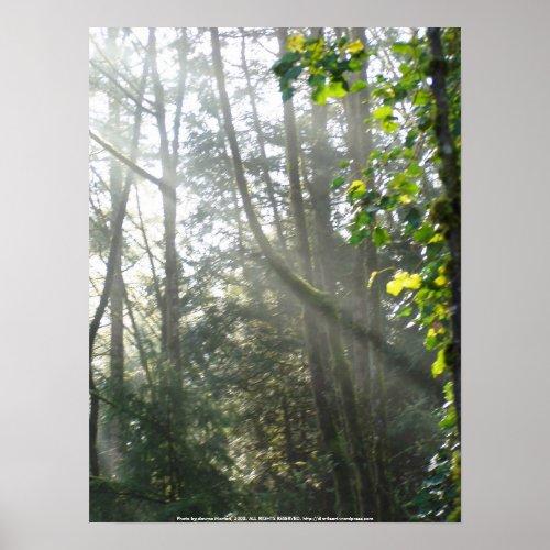 Early Morning Sun Rays #16 print