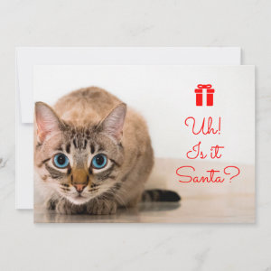 Editable Funny Typography Cute Cat Christmas I Holiday Card