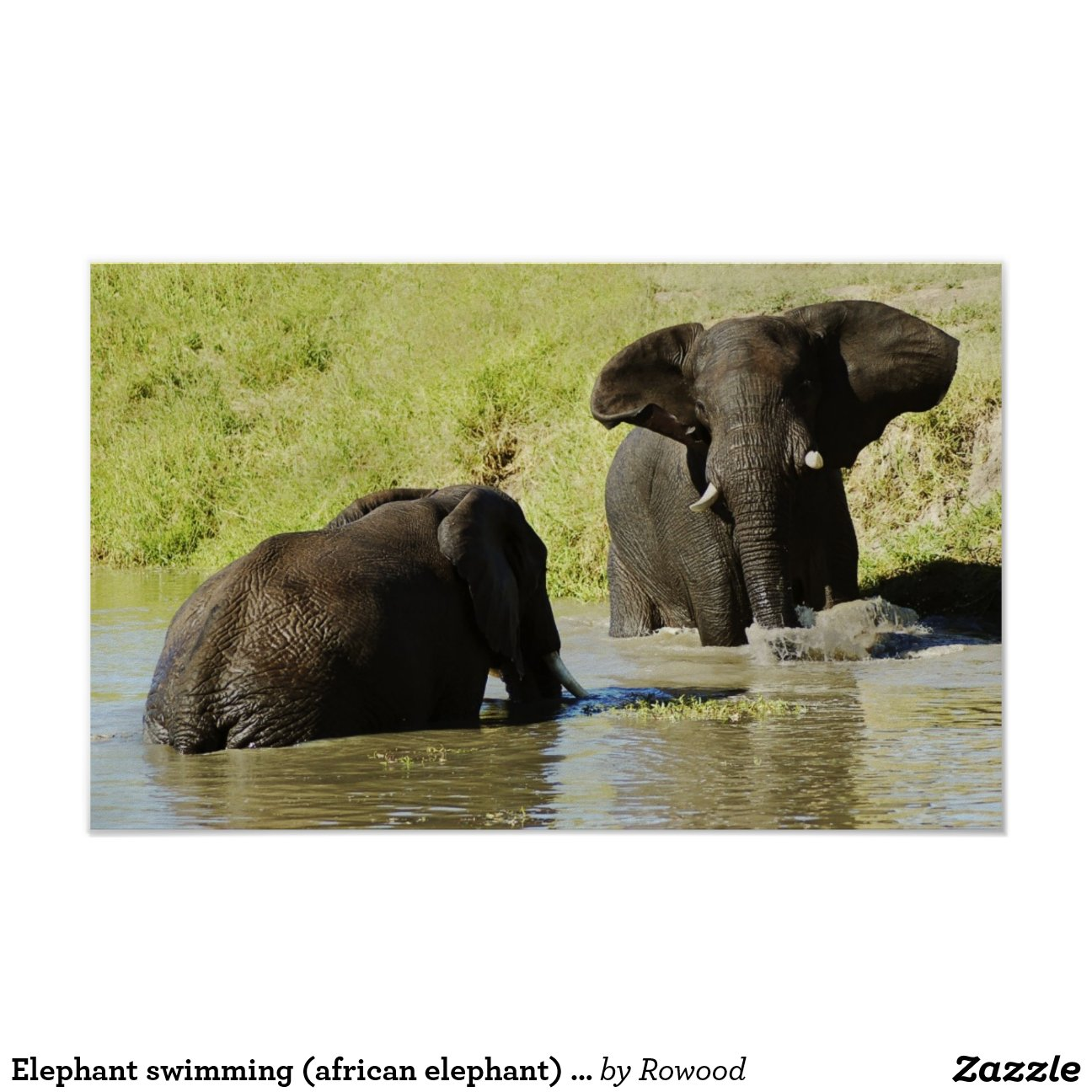 Elephant Swimming African Poster Print