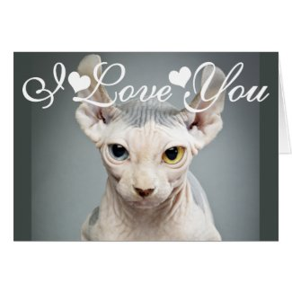 Elf Sphinx Cat Photo Image I Love You Greeting Cards