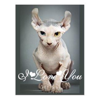 Elf Sphinx Cat Photo Image I Love You Postcards