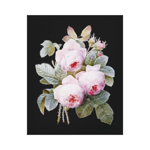 English Bourbon Roses on Black by Redoute wrappedcanvas