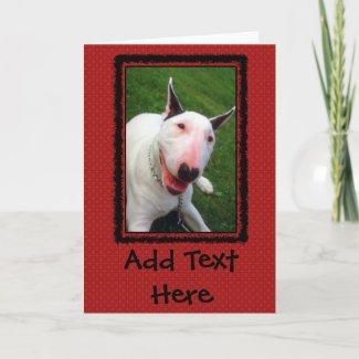 English Bull Terrier card