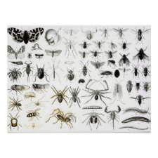 Entomology, Myriapoda and Arachnida Print