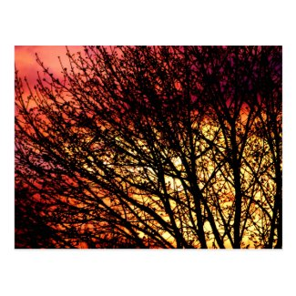 Evening Light Blank Notecard Post Card