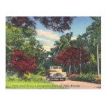 Everglades National Park Florida vintage Postcard