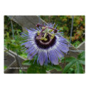 Exotic Blue Wildflower Poster