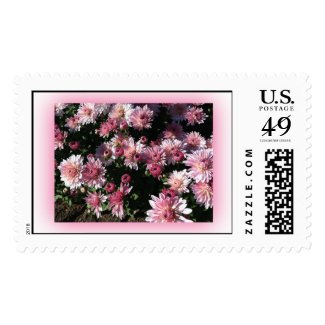 Fall Mums At Sunset Postage Stamps