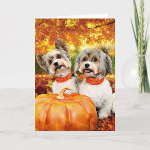 Fall Thanksgiving - Max & Leo - Yorkies Holiday Card