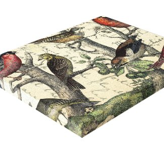 Finches Looking Canvas Print