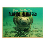 Florida Manatees Postcard