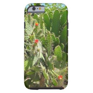 Florida Semaphore Cactus Naples Botanical Garden