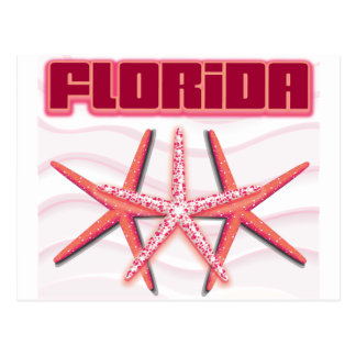 Florida Starfish Postcard